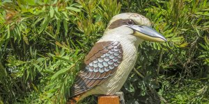 Barry Mousley Kookaburras