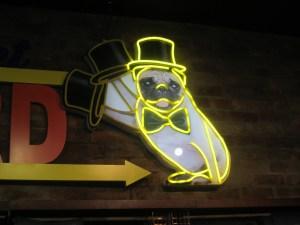 Top hat pug, Auckland, New Zealand,