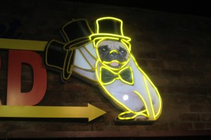 Top hat pug, Auckland, New Zealand,